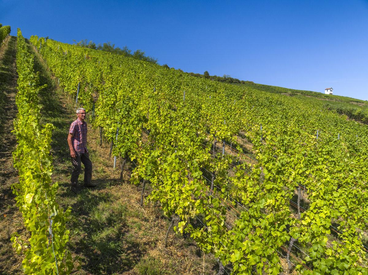 Dans les vignes du Clos Zisser dans le Grand Cru Kirchberg de Bach